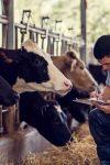 A Zootecnia e o avanço da produção animal em Rondônia